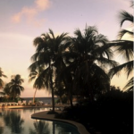 New IRS Amnesty Program for Foreign Accounts